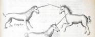 three engravings of unicorns