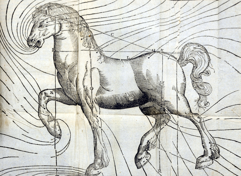 An engraving of a horse surrounded by swirling lines
