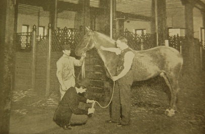 Half tone photo of three men drawing blood from a horse in a stable.