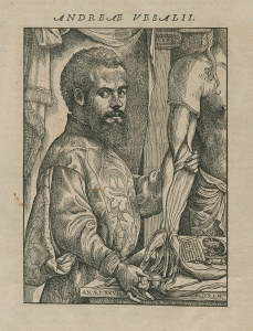 A portrait of Vesalius displaying a partialy dissected cadaver