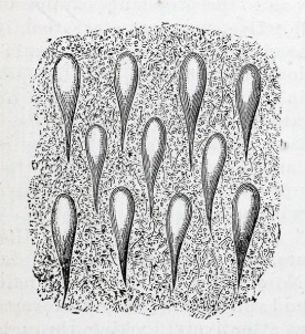 An engraving of a view through a microscope.