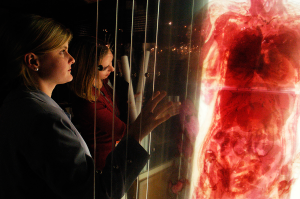 Two women interact with a life size layered anatomical image.