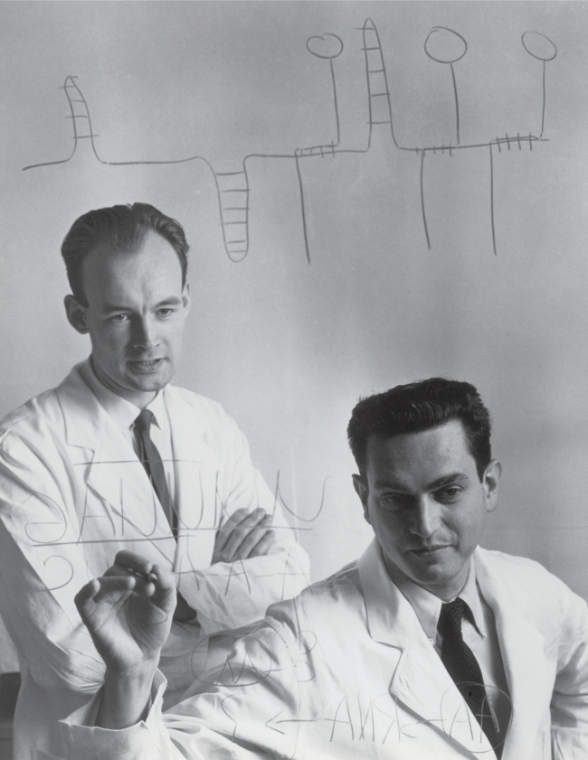 Heinrich Matthaei and Marshall W. Nirenberg