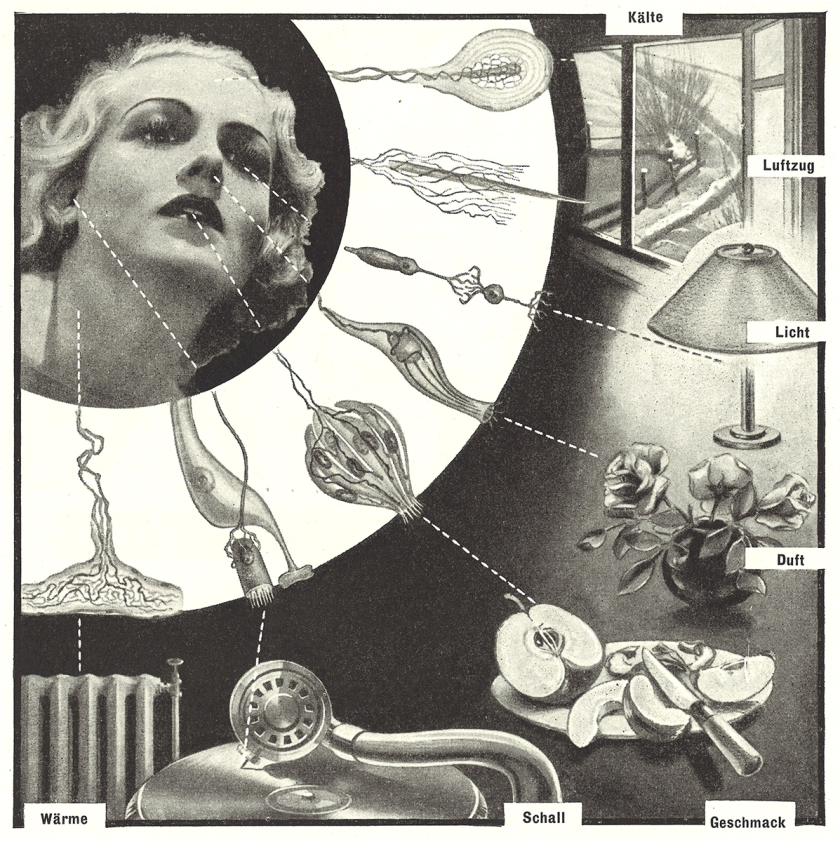 A glamorous woman's face linked to sensory stimulation by drawings of biological receptors.
