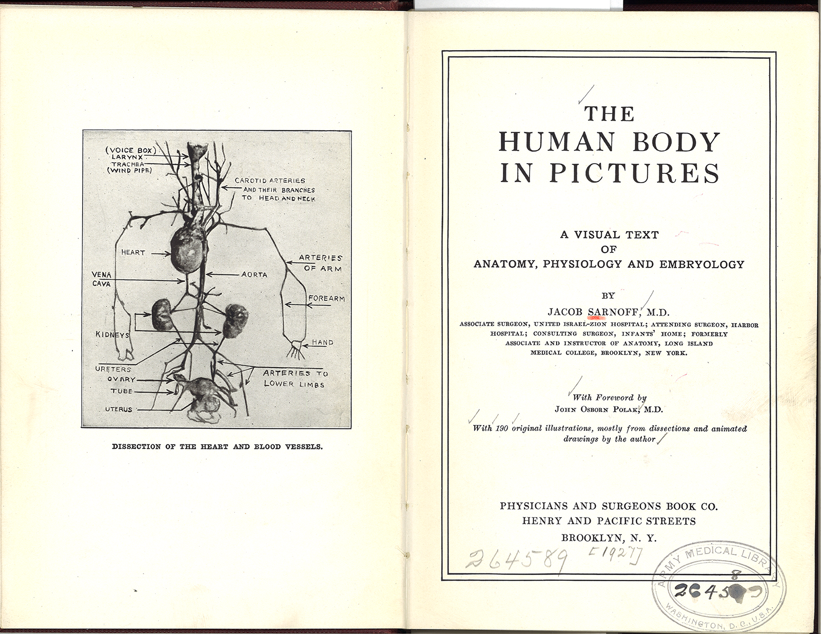 The Human Body In Picturesjacob Sarnoff Circulating Now From Nlm