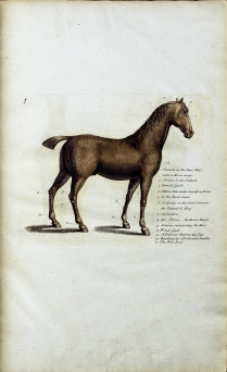 A colored copperplate engraving of a horse annotated with a list of injuries and indicating thier locations.