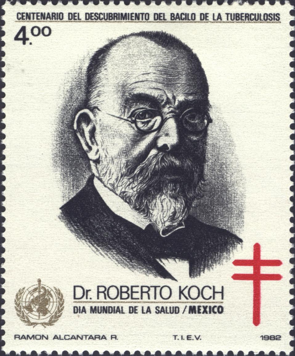 Resultado de imagem para Bacilo de Koch