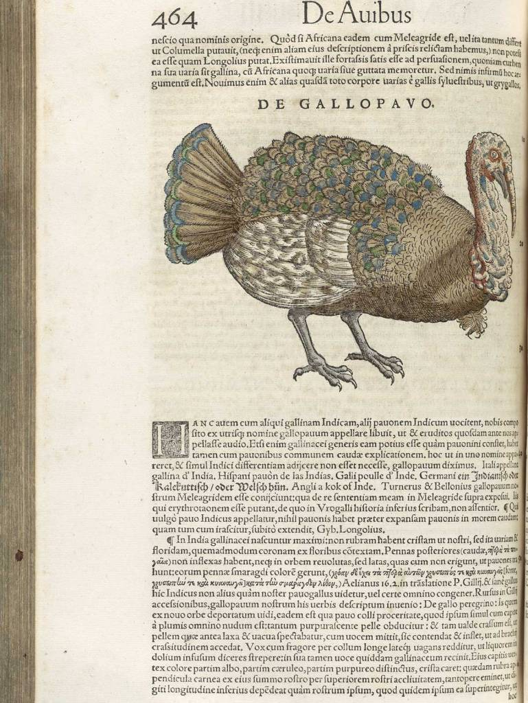 A page from a book featuring a hand colored Illustration of a Turkey.