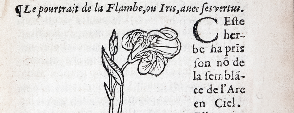 Inset in the text, a wood cut of an Iris plant in bloom,