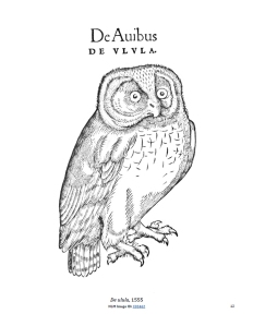 Woodcut of an owl