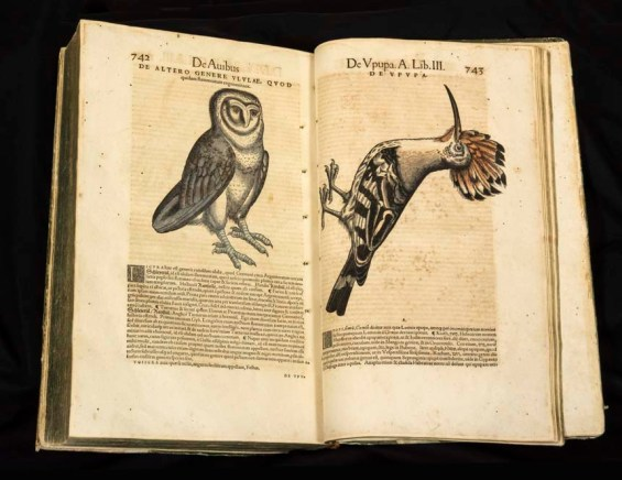 Open book showing an owl and a bird with a long beak above Latin text.