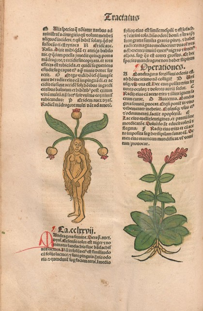 Book page of woman with plant on top of her head.