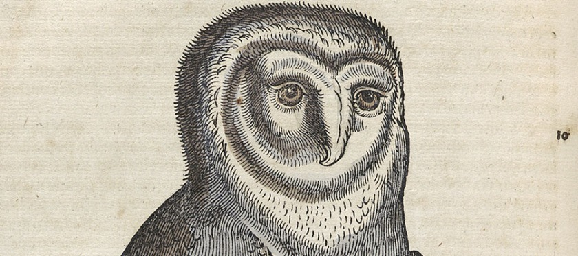 Hand colored woodcut illustration of an owl.