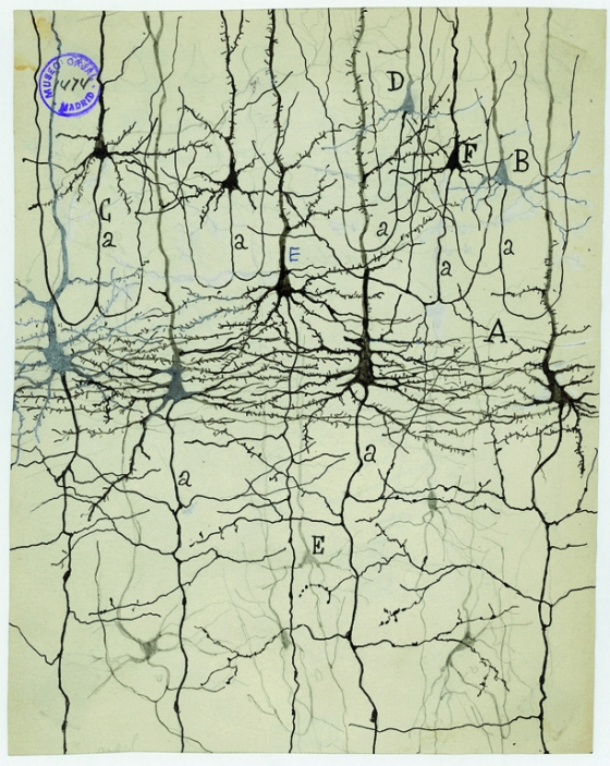 Black lines form an organic network like tree roots that extends off the page.