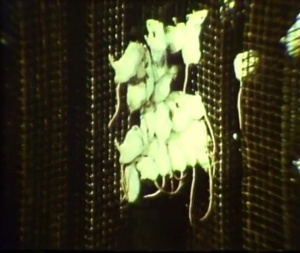 A cluster of mice cling to a metal grid.