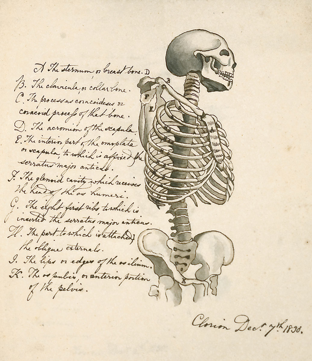 First Scienceanatomy 182930 Circulating Now From Nlm