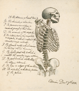 Illustration of a skeleton on the right side and handwritten text on the left side.