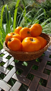 A basket of yellow tomatoes.