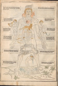 An outline of the figure of a man labeled with zodiac figures and relevant information.