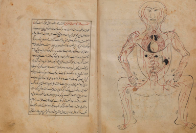 A bound manuscript open to a labeled drawing of the human venus system.